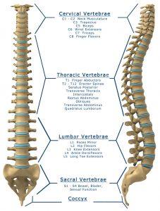 lumbar-compression-fracture-spine-bodyharmonix-brunswick
